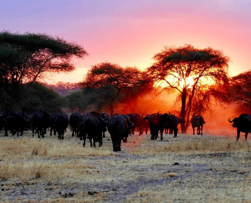 Africa Private Investigations