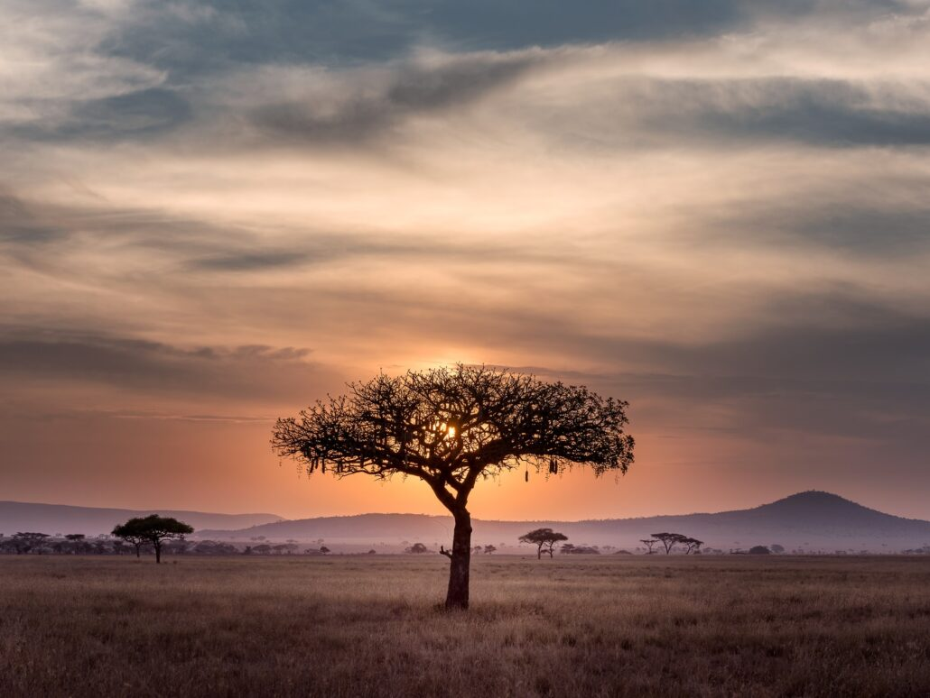 Africa Private Investigators