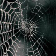 dark web with dangerous spiders